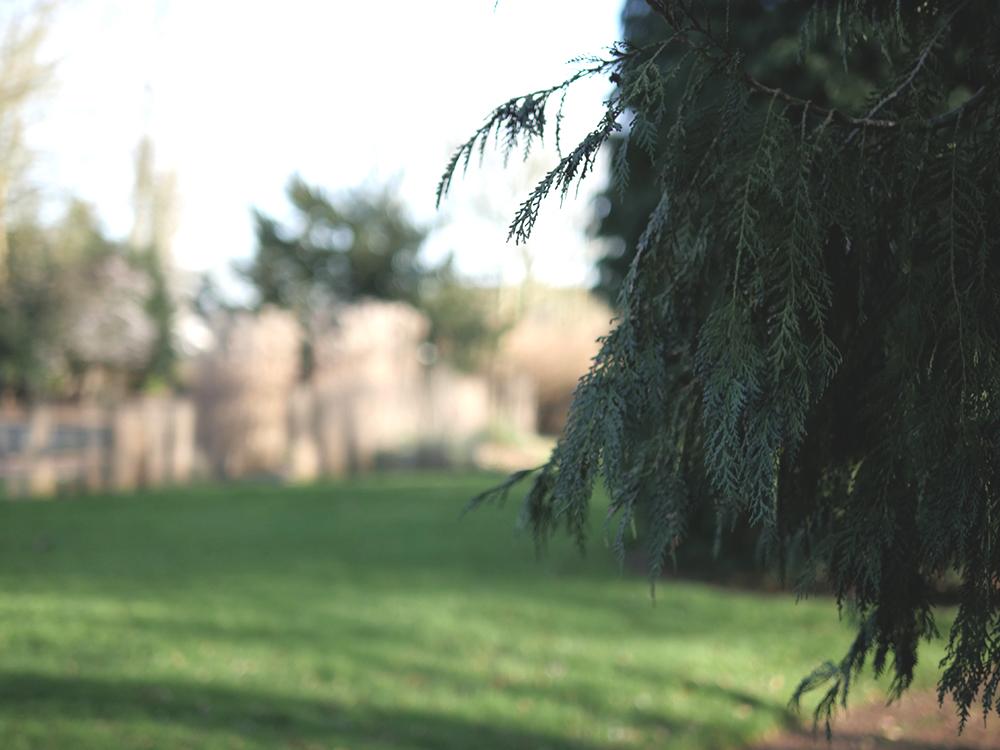 Le jardin public poursuit sa mue avant l'été