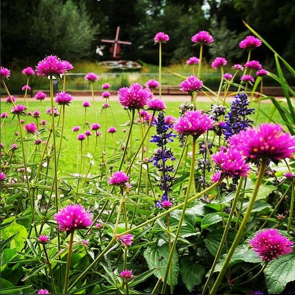 Fleur Instagram Ville D Hazebrouck