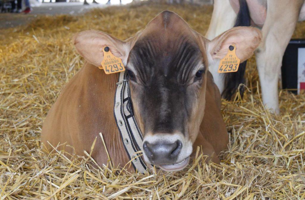 72ème Foire Agricole, Commerciale et Artisanale d'Hazebrouck