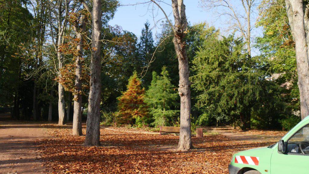 Des marronniers du jardin public devront être abattus