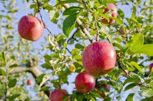 Demander une indemnisation calamités agricoles
