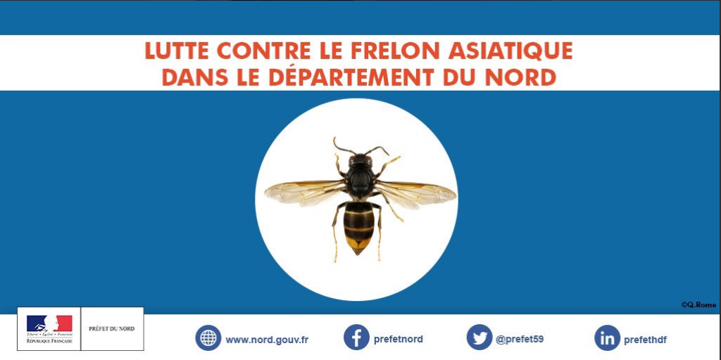 Dispositif de surveillance du Frelon Asiatique